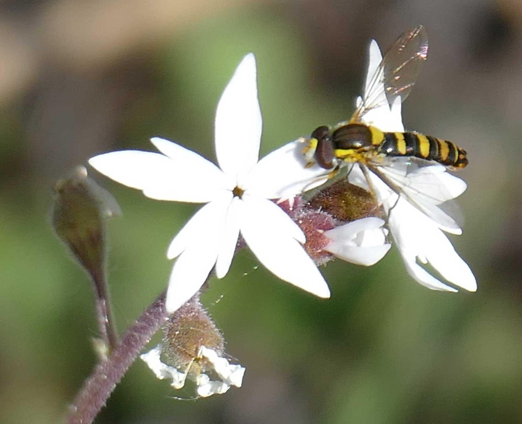 160502_posing_bug